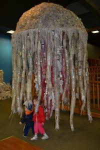 12 jellyfish