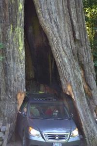 9 drive thru tree