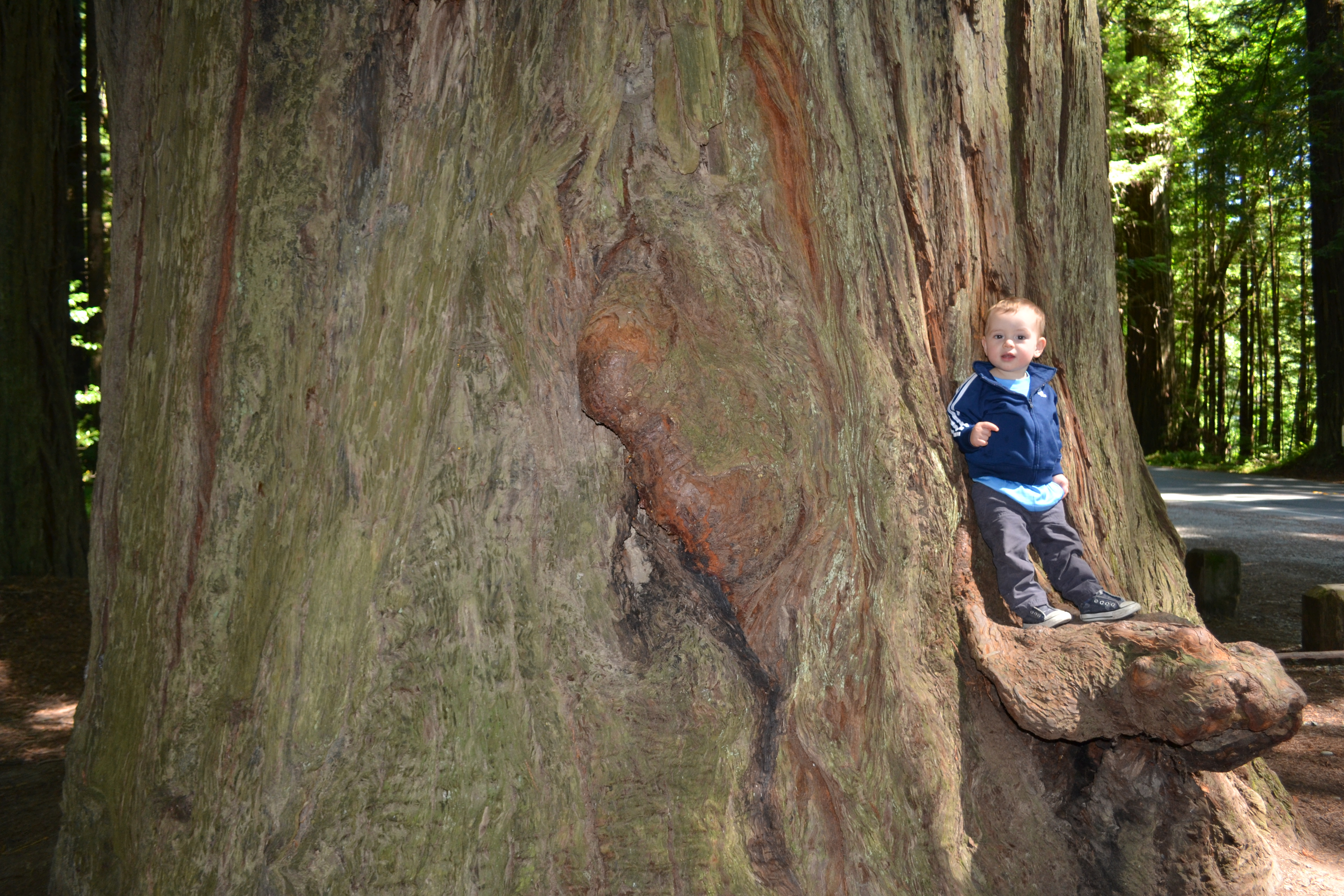 The Oldest And Tallest Living Things In The World Travelling With Ana