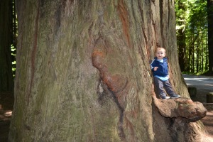 9 Rafa on tree