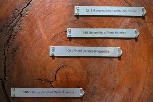 9 rings of history close up