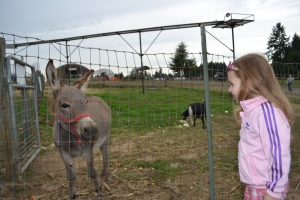 Ana made friends with a donkey.