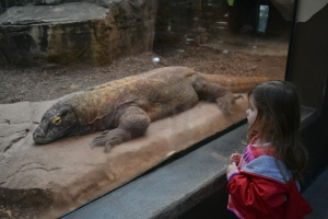 Although the volunteer was unsure how to explain why the komodo dragon didn't have wings.