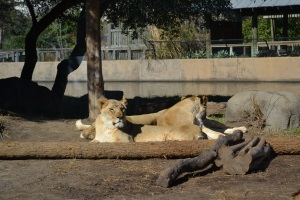 The Houston zoo is awesome!