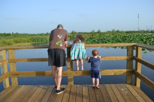 We went down there tonight to hunt for alligators and birds.