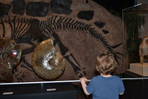 We saw fossils and replicas,