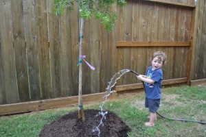 Raffy liked the bottle brush which should flower soon, with a bit more care and watering.