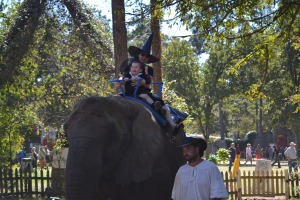 An elephant ride!!