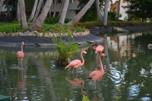 A final goodbye to the flamingoes and we were off….