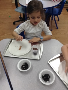 Making edible mud pies.