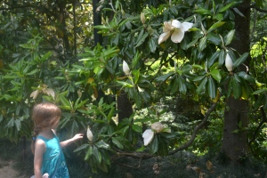 and plants Ima introduced to the area such as magnolias and azaleas.