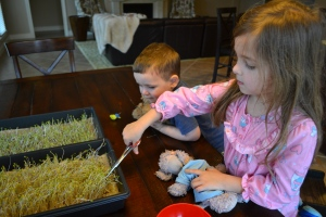 We had the first harvest of our microgreens tonight.
