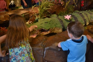 and visiting the alligator that lives at the Rainforest cafe