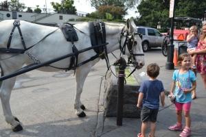 After breakfast we met a Mule named Sugar.